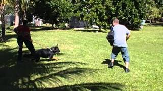 K9 Enforcement Academy In Homestead Florida _ Bella Bite Work