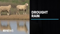 More than a third of NSW is no longer in drought | ABC News
