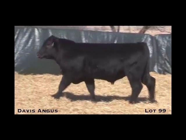 Davis Angus Lot 99
