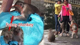 Funny Monkey Goes In The Bag And Got Bitten /Crystal Hug Baby Carter Ask For Food / PTM 460