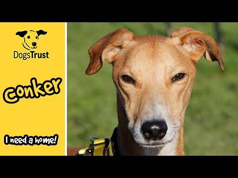 Meet Conker! | Dogs Trust Bridgend