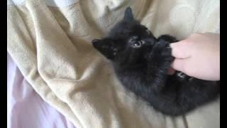 котёнок кусается лёжа
