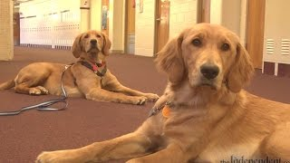 Meet Kody And Oakley, Barr Middle School's New Therapy Dogs
