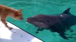 Дельфин спасает собаку (Зевс и Роксана)