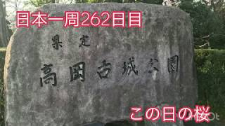 日本一周女ひとり旅262日目。今日みた桜の様子。