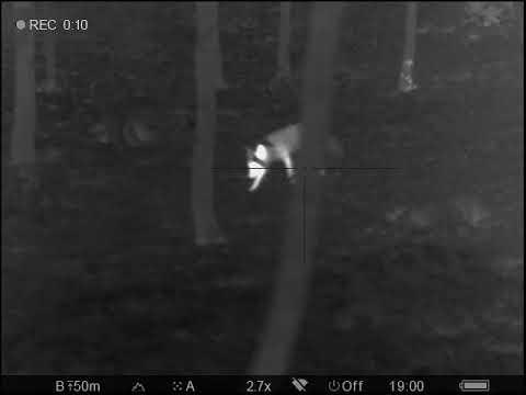 Lov lišky pomocí termovize