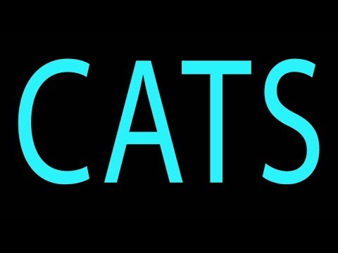 Watch HBO's 'Girls' Parodied By Adorable Kittens