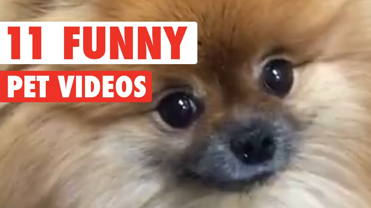 11 Funny Pet Video Compilation 2016