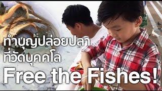 การทำบุญปล่อยปลาและให้อาหารปลาที่วัดบุคคโล
