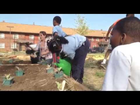 Gardening Program for detroit contemporary.dv