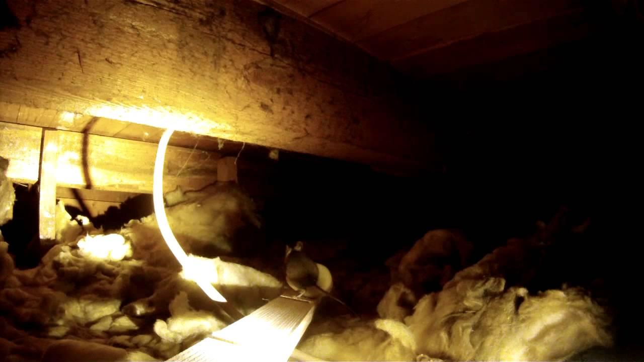 mäuse in der zwischendecke