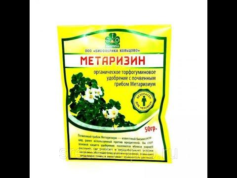 Метаризин. Старт эксперимента по борьбе с подурой