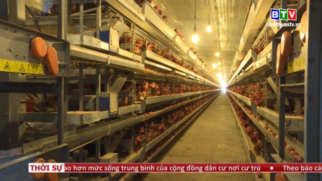 Trang trại chăn nuôi gà lấy trứng công nghệ cao tại Đức Linh – Bình Thuận.