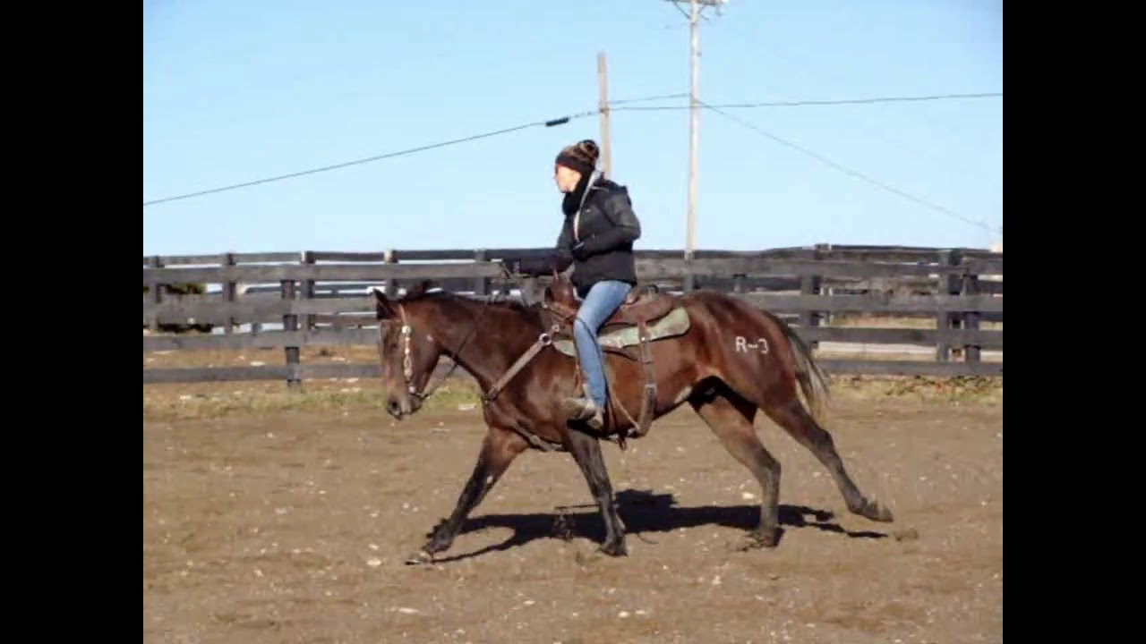 2016 AQHA GELDING, SHOWN IN COW HORSE FUTURITY EVENTS, USED FOR TEAM ROPING AND RANCH WORK