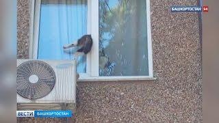Чуть не сгубило любопытство: в Уфе застрявшую в окне кошку сняли на видео