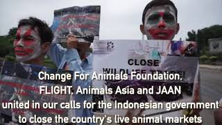 Live animal market protest Indonesia