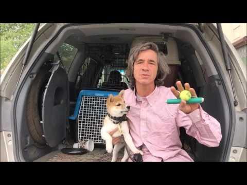 How to Train Shiba Inu Puppy , The program