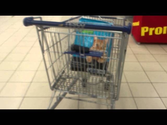 26/6/2013 - SHOPPING MAKANAN KUCING Travel Video