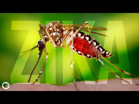 Where Did Zika Come From?