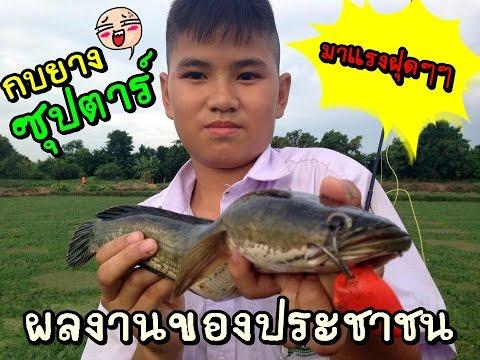 เด็กตกปลาช่อนนากระเฉด !!!