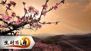 《生财有道》 20190507 咱们家乡春天美 江苏无锡:春到阳山桃花美| CCTV财经