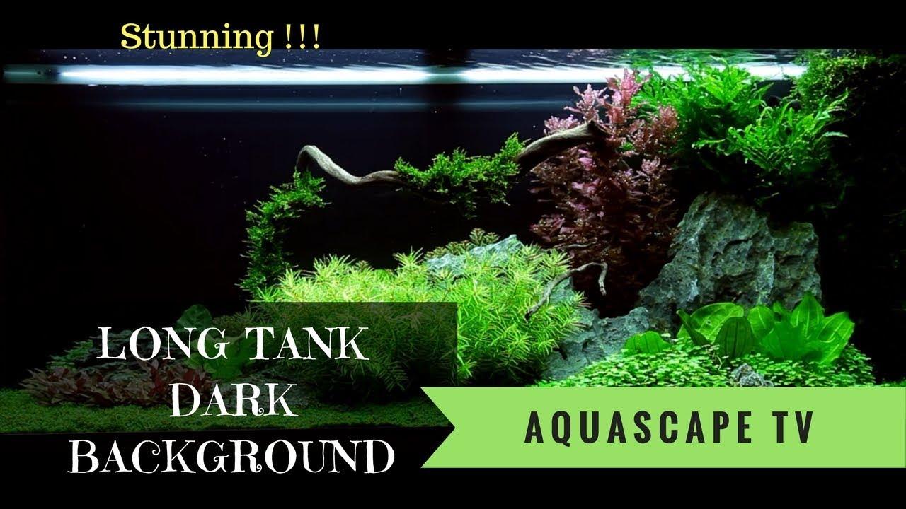 Beautiful Long Tank Aquascape With Dark Background Aquascape Tv Youtube