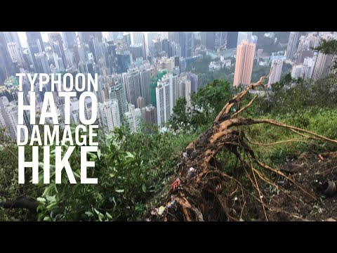 Typhoon Hato damage hike on Hong Kong's Peak.