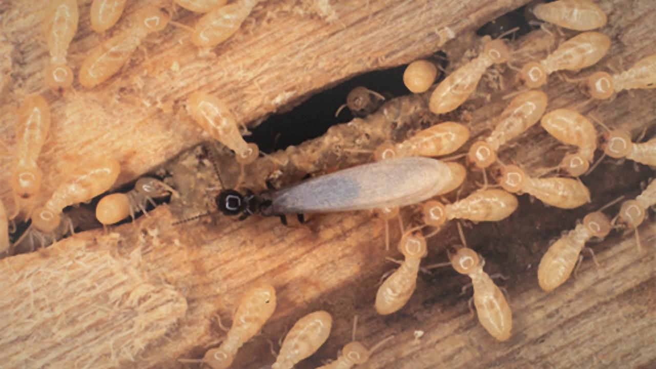 نتيجة بحث الصور عن شركة مكافحة النمل الابيض بجدة