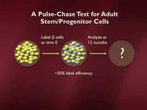 Understanding Embryonic Stem Cells Part 5 of 6