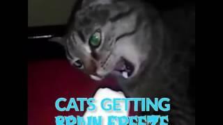 Cat brain freeze