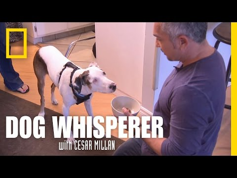 Sandy's Smell | Dog Whisperer