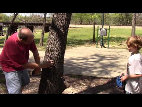 Educating a kid in the park about Texas ratsnakes