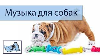 Музика, щоб заспокоїти вашу собаку під час підготовки і ванною!