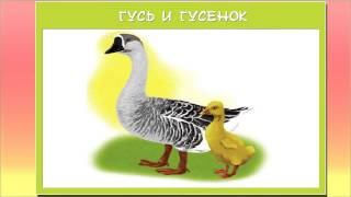 Картинки для детей домашние животные и их детеныши