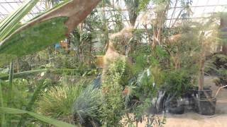 Kew Gardens   Royal Botanic Gardens   HQ video