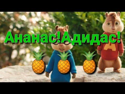 Бурундуки поют Ананас! Адидас!