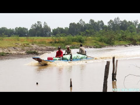 Farmer Transport Rice Without Tractor | Boat Transport rice From Farm