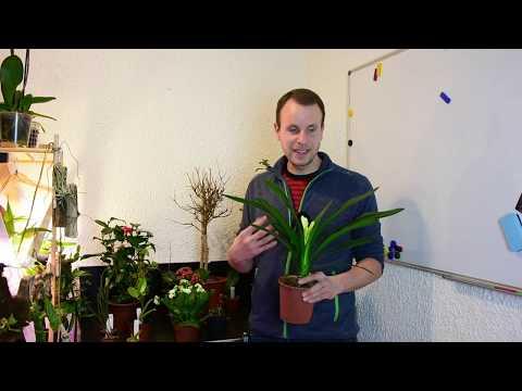 Welche Pflanzenfragen interessieren Euch zur Zeit am Meisten? z.B. Orchideen, Clivie, Kalanchoe