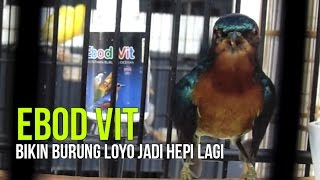 Gambar cover SUARA BURUNG : Kicau Kolibri Gacor Kena EBOD JOSS Cocok Buat Suara Master