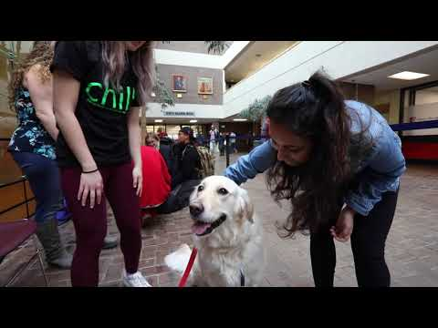 Therapy Dogs Relieve Student Stress
