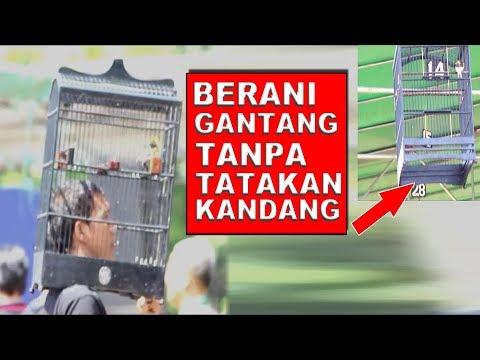 Download Lagu GANTANG KENARI TANPA TATAKAN BAWAH.... ADA YANG BRANI