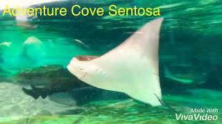 Adventure Cove Sentosa