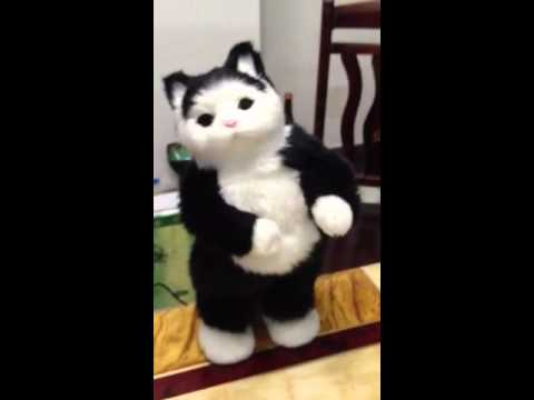 This Chinese cat knows how to dance.