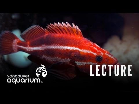 Introduction To Marine Life Course: Sub-tidal Marine Organisms