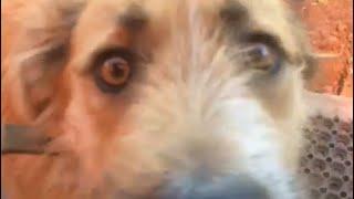 Собака - Веган. «Муха» грызет огурцы