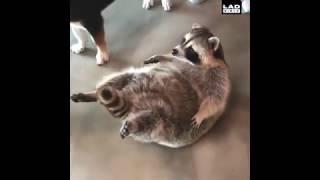 Coub #1 | Best  | Funny | Cats | Animals | Cute | Смешные | Кубы | Животные | Милота