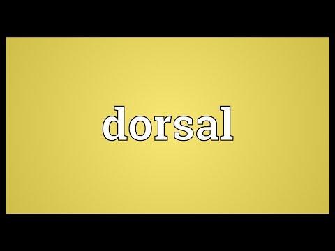 Dorsal Meaning