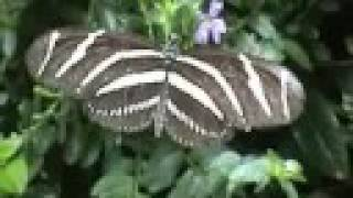 Sertoma Butterfly House-sioux Falls Sd