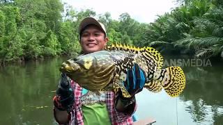 MANCING MANIA | BUMBLEBEE VAN PAPUA (30/08/19) Part 1