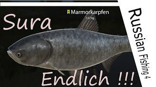 Russian Fishing 4 - #67 - Sura - Marmorkarpfen